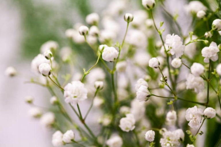 Шпаргалка для начинающих дачников: Растения и стили
