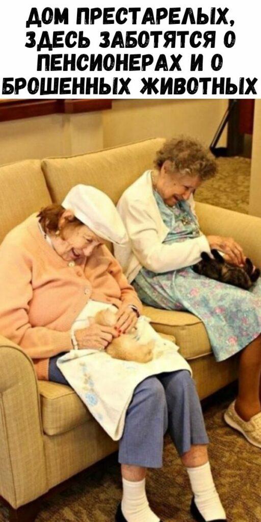 Дом престарелых, здесь заботятся о пенсионерах и о брошенных животных