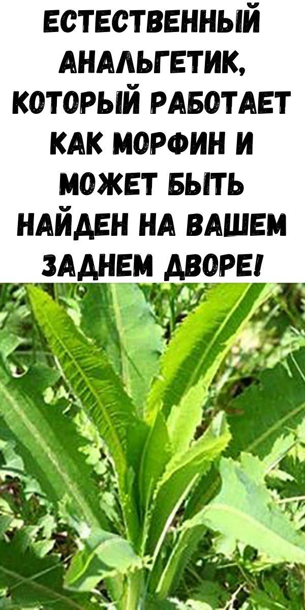 Естественный анальгетик, который работает как морфин и может быть найден на вашем заднем дворе!