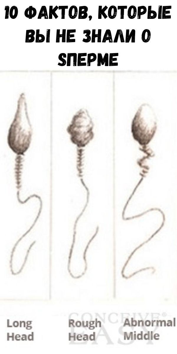 10 фактов, которые вы не знали о sперме