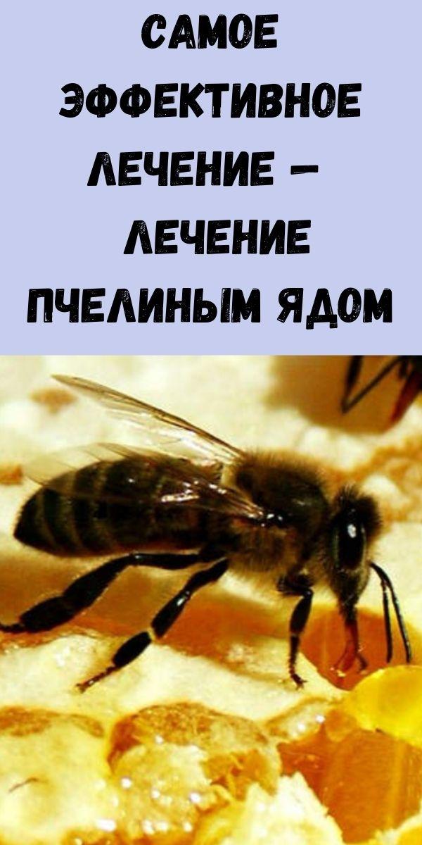 Самое эффективное лечение — лечение пчелиным ядом