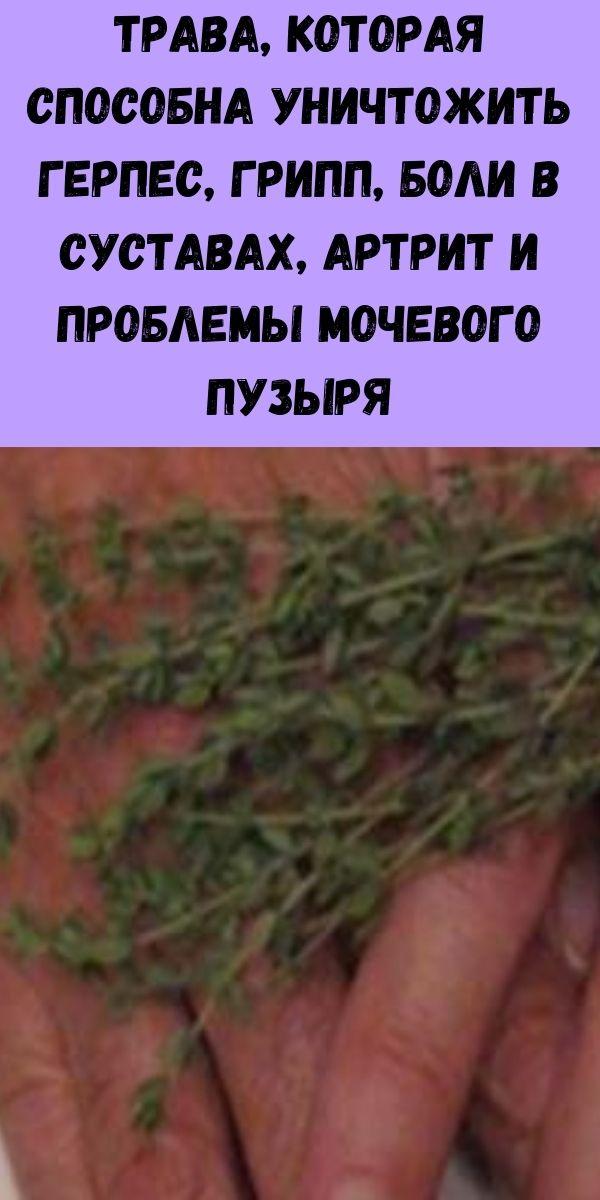 Трава, которая способна уничтожить герпес, грипп, паразитов, боли в суставах, артрит, ишиас и проблемы мочевого пузыря