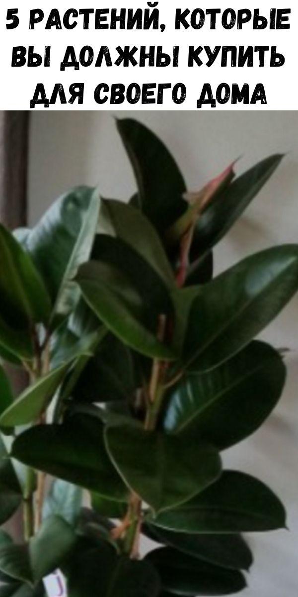 5 растений, которые вы должны купить для своего дома, чтобы бороться с простудой и помочь вылечить бессонницу