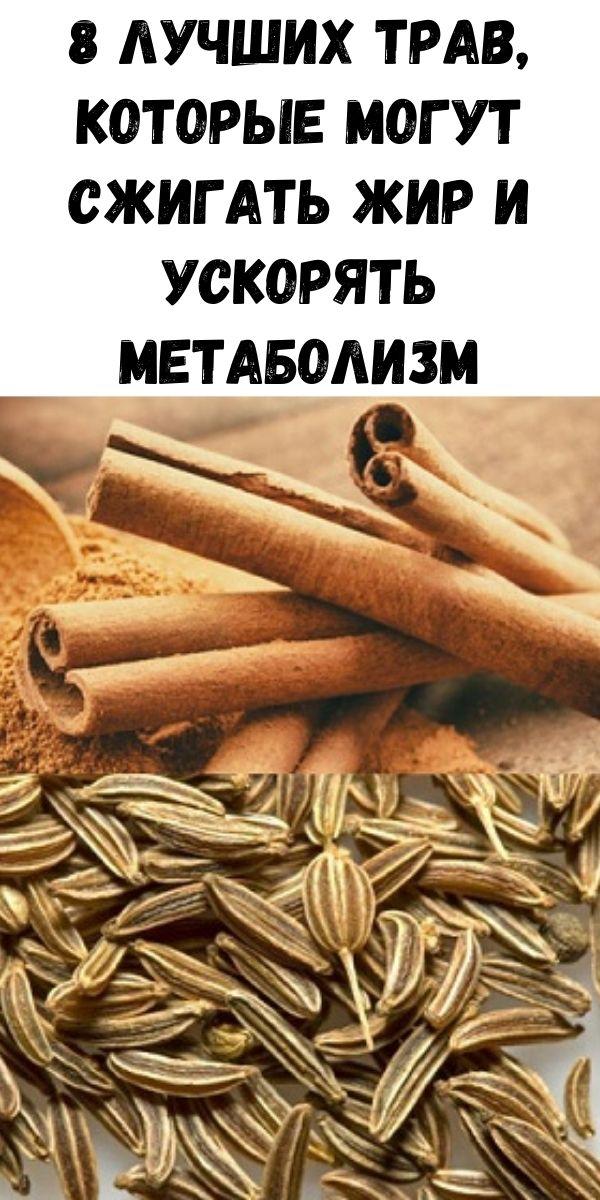 8 Лучших трав, которые могут сжигать жир и ускорять метаболизм