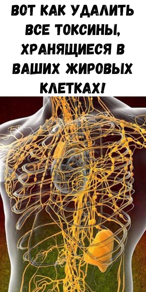 Вот как удалить все токсины, хранящиеся в ваших жировых клетках!