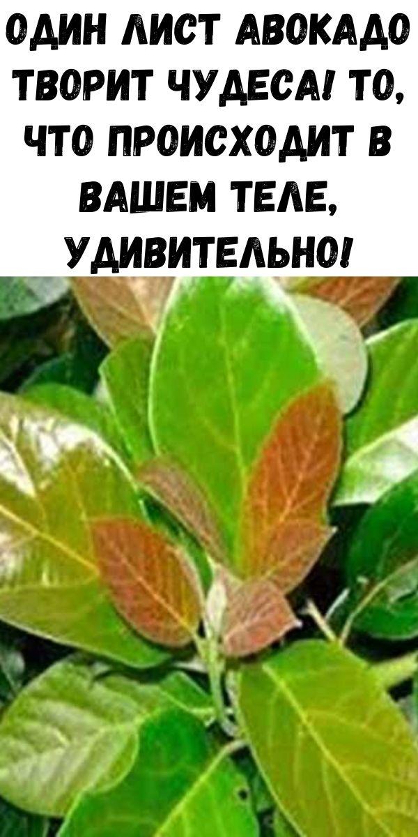 Один лист авокадо творит чудеса! То, что происходит в вашем теле, удивительно!