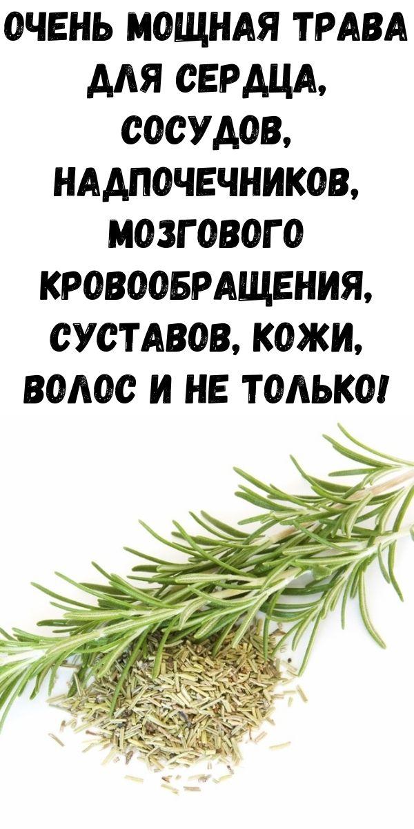 Очень мощная трава для сердца, сосудов, надпочечников, мозгового кровообращения, суставов, кожи, волос и не только!